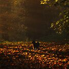 Cat catches last rays of autumn sun by Christopher Cullen