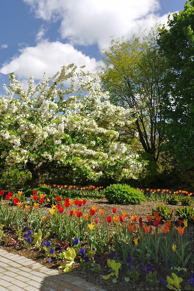 Flowering Cherry by Kenneth Hoffman