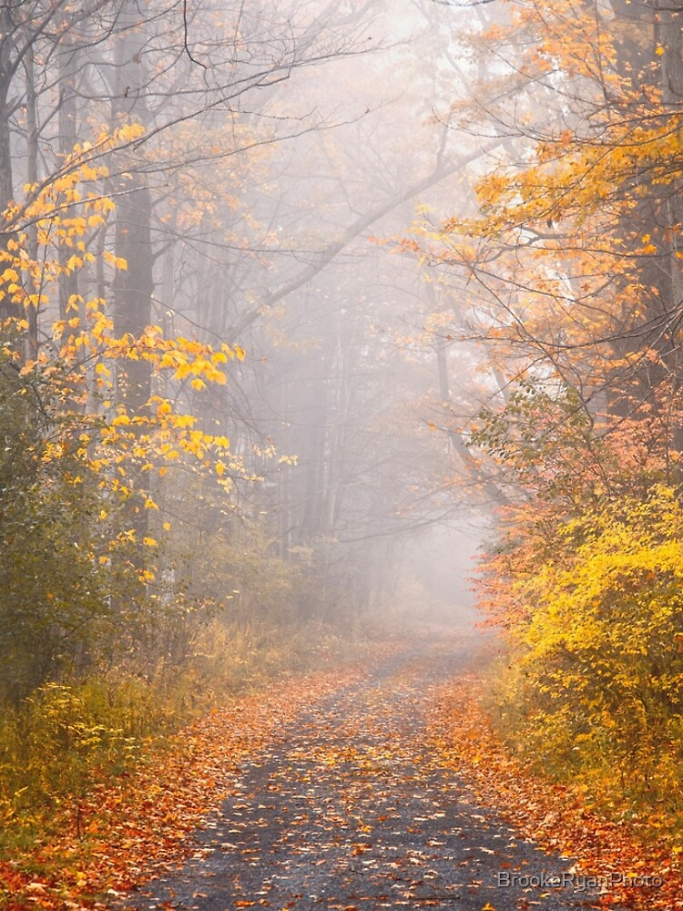 Road in Autumn Mist by BrookeRyanPhoto