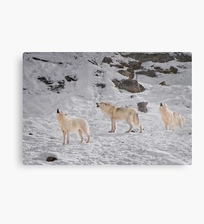 Wolf Karaoke Metal Print