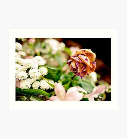 Wilted Rose Art Print