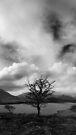 Lone Tree by Paul McSherry