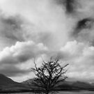 Lone Tree by Paul McSherry