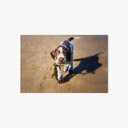 Seaweed Puppy Spinone  Art Board Print