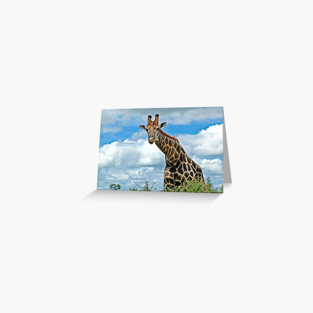 Hello Giraffe Greeting Card