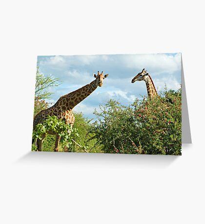 Giraffe Duo Greeting Card