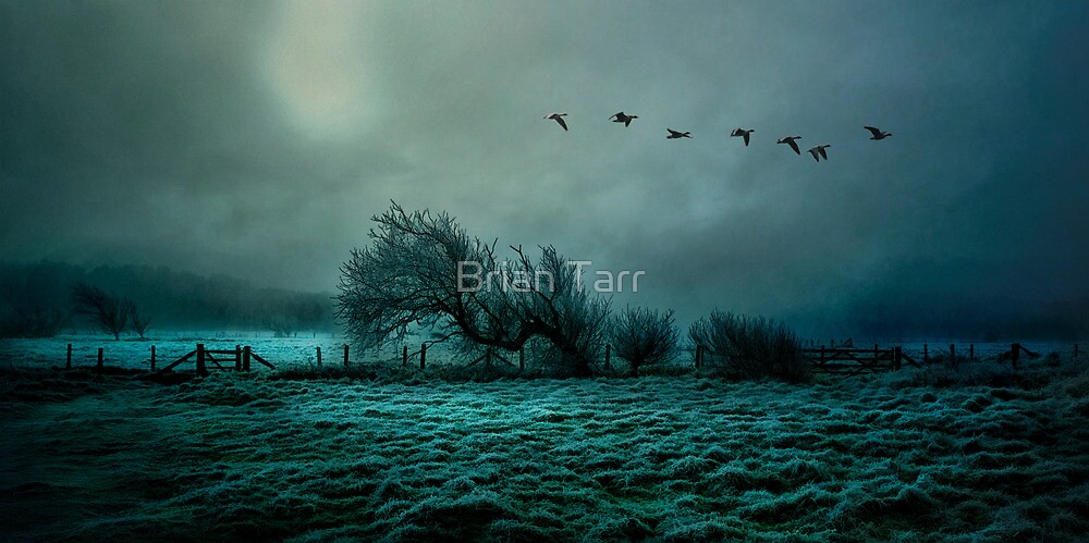 The Last Flight Home by Brian Tarr