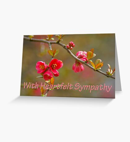 flowering quince symapthy card Greeting Card