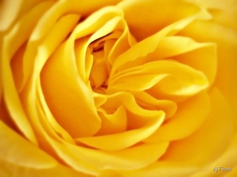 Golden Rose Petals. by Aj Finan