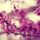 A Taste of Spring In The Trees - Flowers by ameliakayphotog