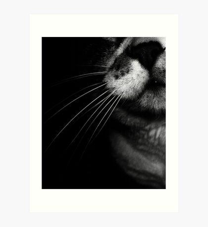 02-25-2011  My Cat's Nose Art Print