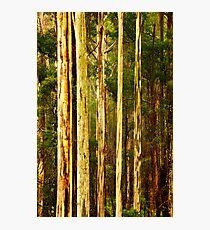 Wet Mountain Ash Trees Photographic Print