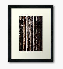 Mountain Ash in Spring Framed Print