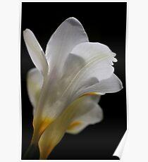 White flower 4558 Poster