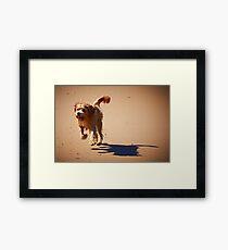 Shaggy Framed Print