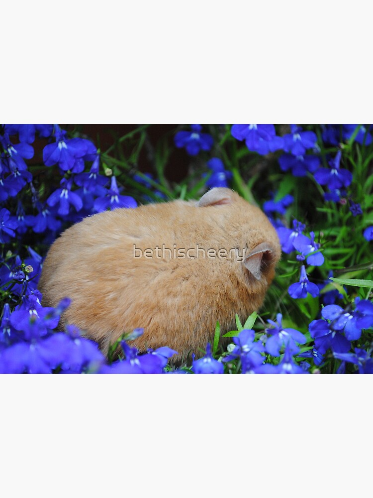 hamster sleeping in flower bed | Greeting Card