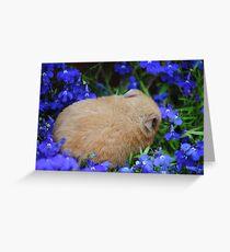 hamster sleeping in flower bed Greeting Card