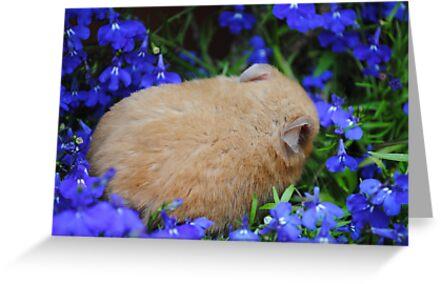 hamster sleeping in flower bed by bethischeery