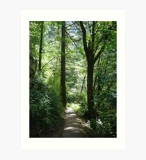Forested Path Art Print