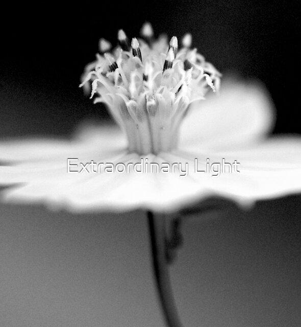 Pirouette by Extraordinary Light