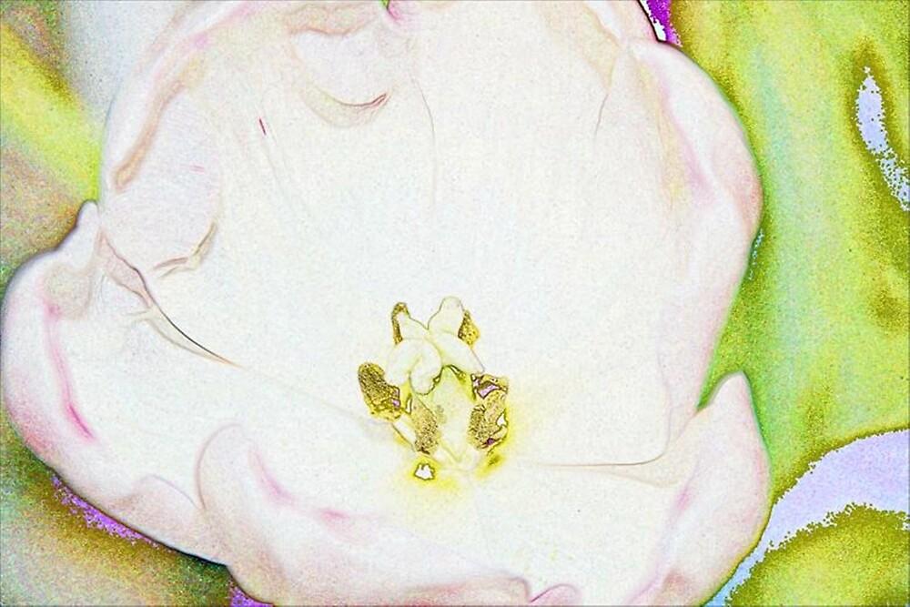 Open Tulip Art by AmyKippernes