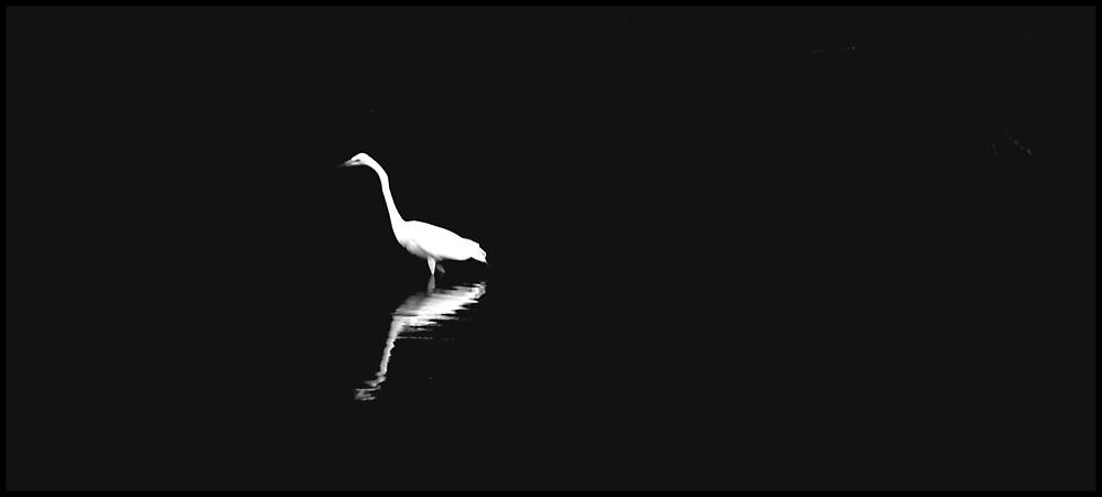 la egret by Elizabeth Rodriguez