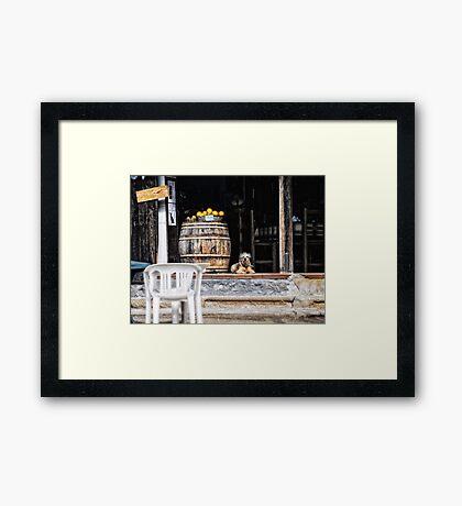 Tavern dog with oranges Framed Print