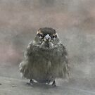 Little Sparrow by swaby