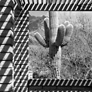Southwest Patterns by Justin Baer