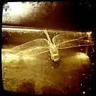 iPhone Dragonfly by TeAnne