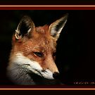 The Red Fox by snapdecisions