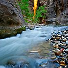 Silky Water in Zion by Bruce Alexander