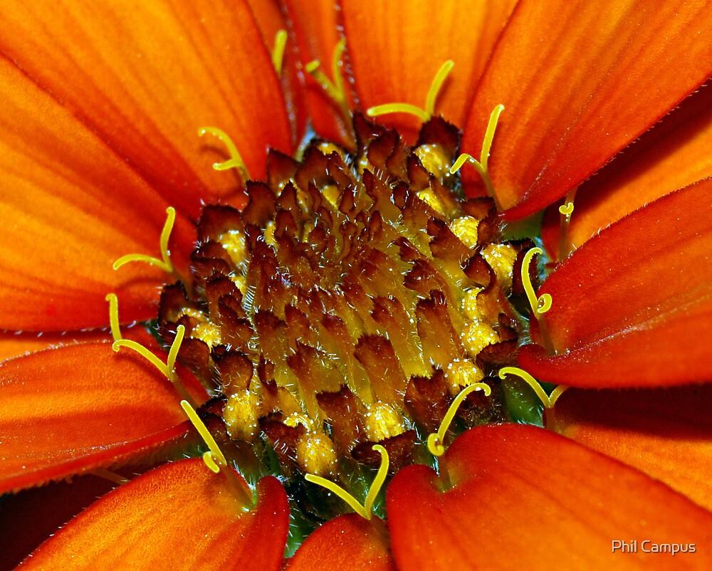 Orange Flower Up Close by Phil Campus