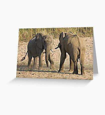 Elephant Disagreement Greeting Card