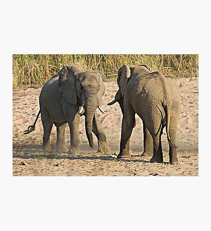 Elephant Disagreement Photographic Print