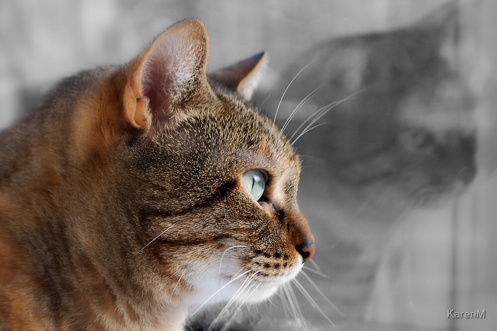 Tabby Reflection by KarenM