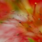 Red Blur by BoB Davis