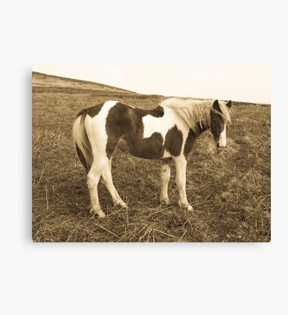 Wild West Pony Canvas Print