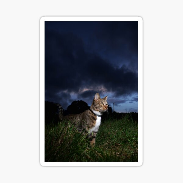 Tabby cat at sunset Sticker