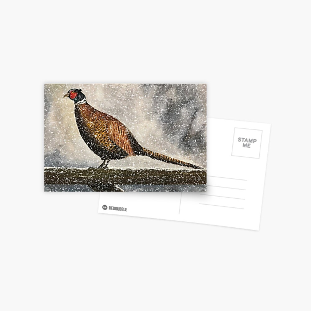 Pheasant in Falling Snow - Blank Card Postcard