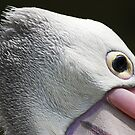Pelican 1 by mistarusson