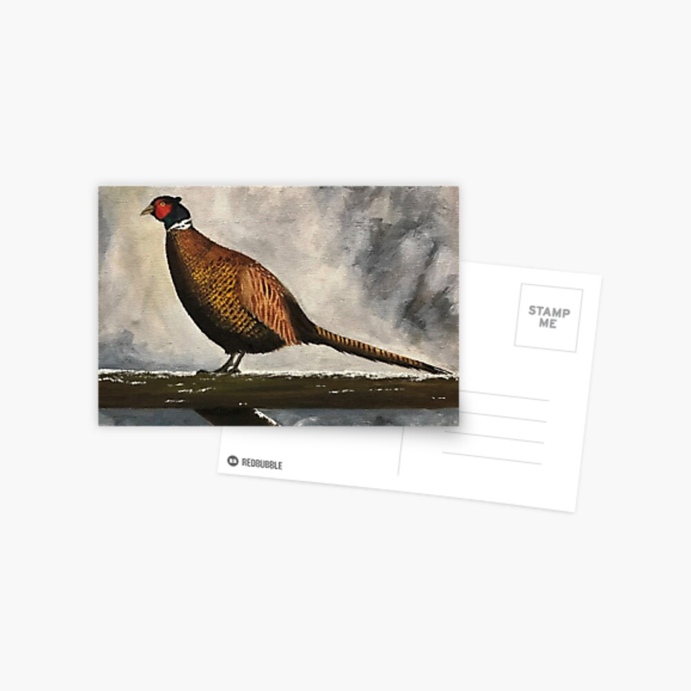Pheasant in Winter - Blank Card Postcard
