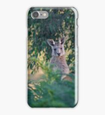Curious kangaroos iPhone Case/Skin