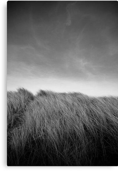 Grass in Bull Island by Alessio Michelini