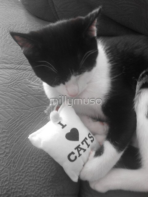 I love cats  by millymuso
