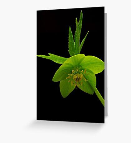 """Green flower"" Greeting Card"
