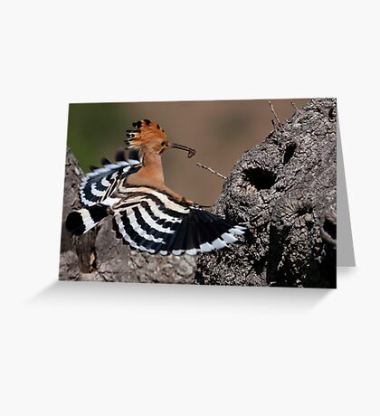 Happy Hoopoe Greeting Card