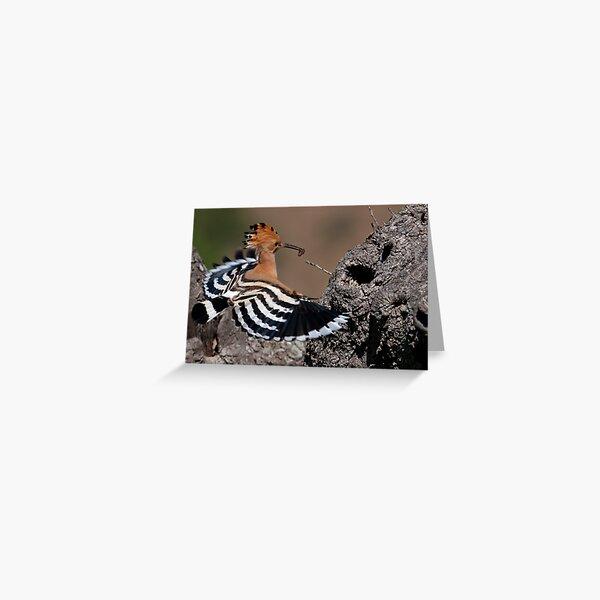 Happy Hoopoe Greeting Card