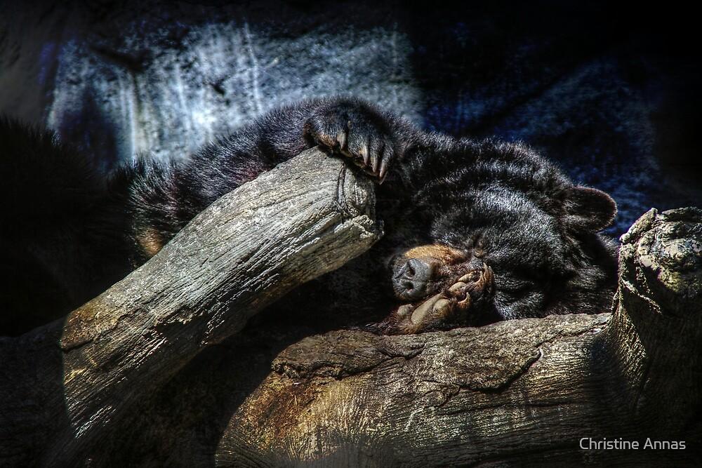 Snoozin' by Christine Annas