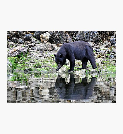 Bear reflection  Photographic Print